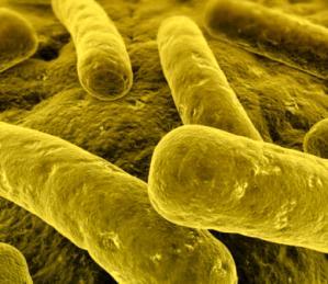 Туберкулез легких - лечение народными средствами