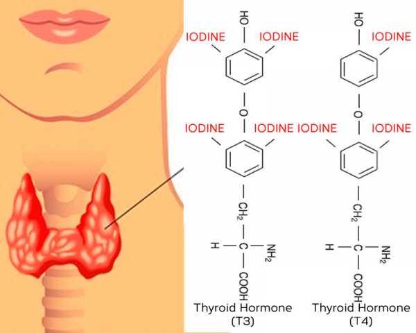 Йод и щитовидная железа