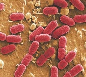 Лечение туберкулеза в домашних условиях