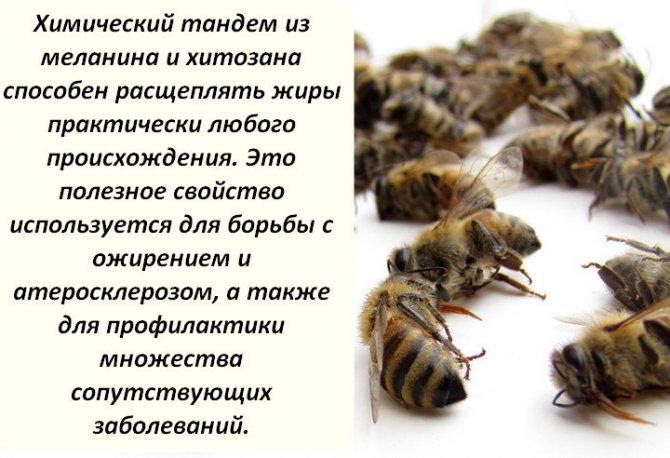 Пчелиный подмор - рецепты