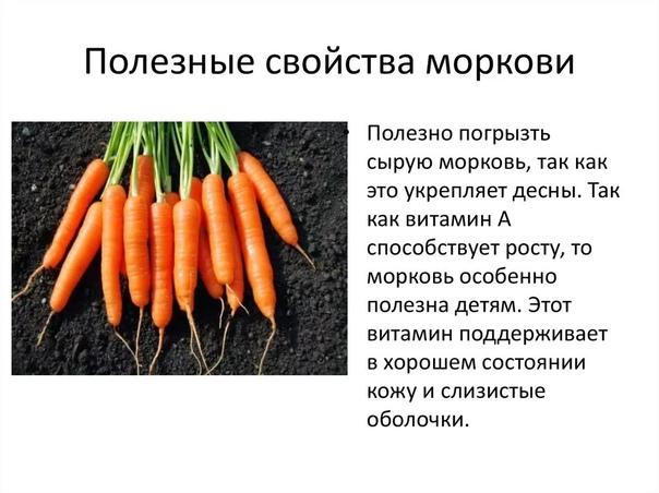 Полезные свойства моркови и бета-каротина